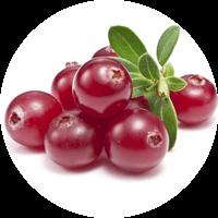 ingredient_groseille (1)